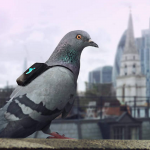 Pigeons wearing wireless pollution-monitoring devices will report back via Twitter